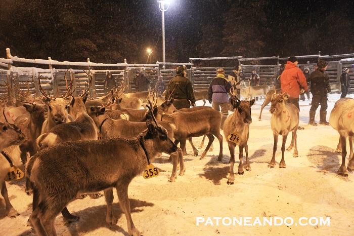 pueblo encantado en Laponia-Patoneando (34)