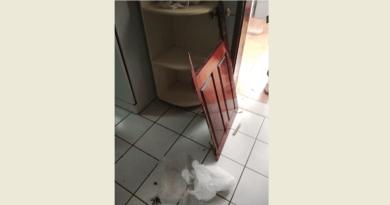 Ladrões promovem quebradeira e levam fogão, bebedouro e outros materiais do CER, em Patos