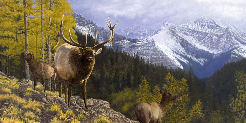 The West Lives On Elk Original Oil Painting By Artist Pat Pauley