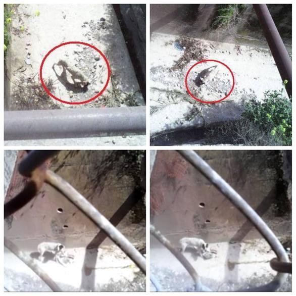 Πάτρα: Σκύλος βρέθηκε σκελετωμένος σε αυλάκι - Δείτε φωτογραφίες και βίντεο