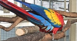 S Macaw Colors