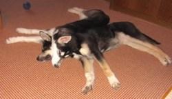 Mireille Wulf's dogs