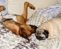 RedDog & the Pug (Lola? Shar?) Bruce