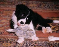 Will pup 2