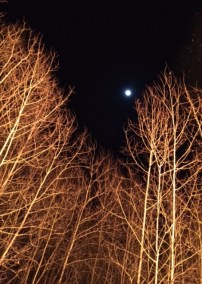 bonfire moon trees 2017