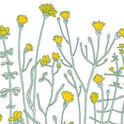 Produkt Illustration Blooming