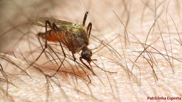 dengue - Doenças tropicais