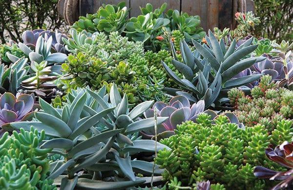 ervas medicinais - Os benefícios das plantas medicinais (parte1)