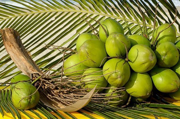 coco verde - Coco verde te deixa mais bonita!