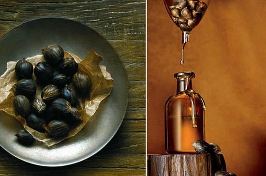 oleo de ojon cabelos beneficios - Óleo de Argan ou óleo Ojon? Qual é o melhor para seus fios?