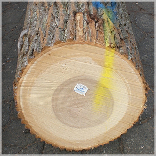 Poplar Woodworking