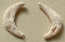 oreja de muñeca de tela 3