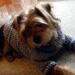 Suéter a crochet para mascotas