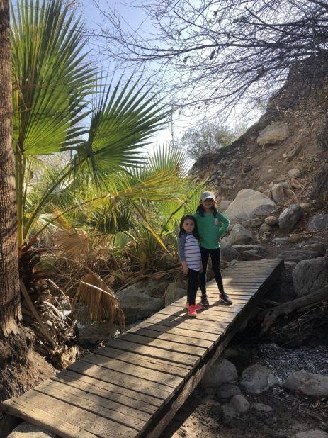 Oasis in Indian Canyon #oasis #palmsprings #indiancanyon #hike #hikewithkids #palmspringswithkids #california