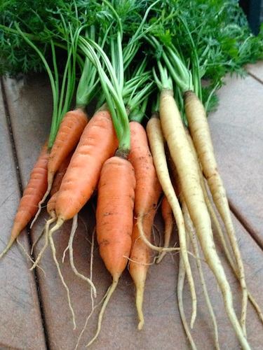 Grow a variety of carrots to discover which grow best in your garden.