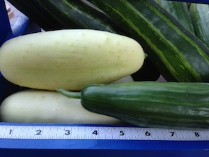 Home grown cucumbers are the best way to avoid the slick, waxy coating on grocery store cucumbers.