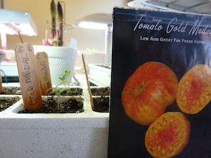 Gold Medal Seedling
