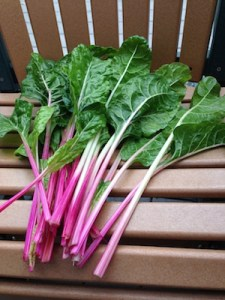 Peppermint stick chard is as good in the peppermint stick chard is as good in the ornamental garden as it is in the vegetable garden.
