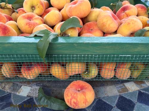 Today's harvest basket 6/30