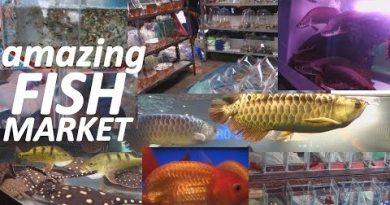 Aquarium Fish Market in Bangkok Thailand. WOW!!!