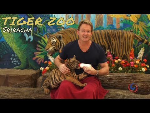 The unbelievable Sriracha Tiger Zoo spirited open air of Pattaya