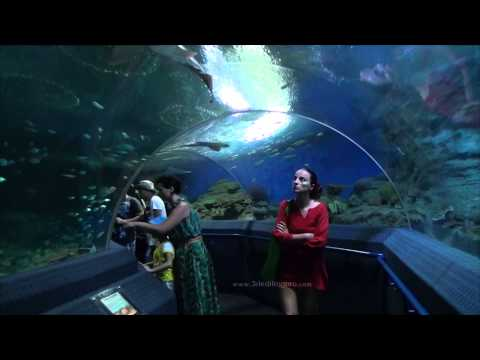 Aquarium Pattaya Underwater World Thailand 2013 HD