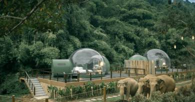 Thailand Wonderful Bubble Rooms To Expend Evening With Elephants