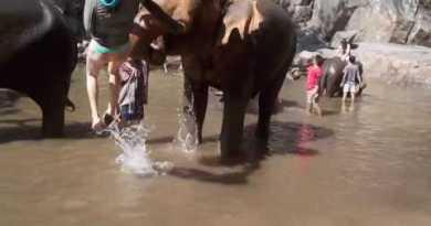 Elephlying in Thailand