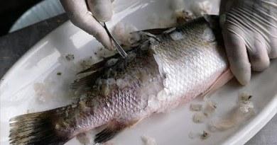 Thai Avenue Food – DEEP FRIED SEA BASS Bangkok Seafood Thailand