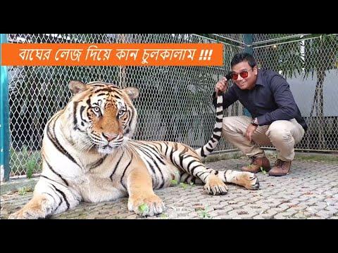 My first meet with unprecedented Bengal Tiger II Tiger Park II Thailand