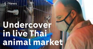 'Another Wuhan within the making?': Undercover in a Thailand market selling dwell animals