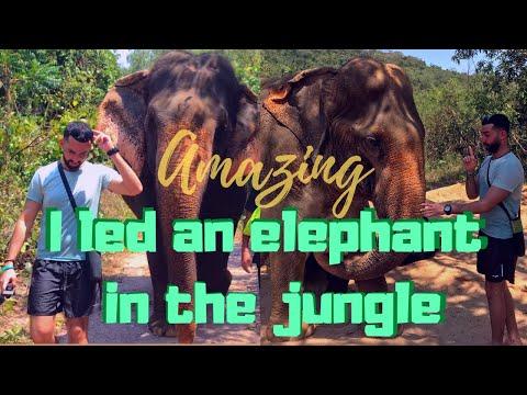 Phattaya Elephant Sanctuary – LIMITLESS  adventures in THAILAND