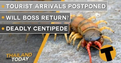 Thailand News On the present time | Vacationer arrivals postponed, Will Boss return?, deadly centipede | October 8