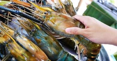 Thai Food – GIANT CHILI PRAWNS Aoywaan Bangkok Seafood Thailand