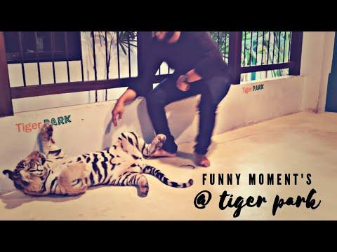 FUNNY MOMENTS AT TIGER PARK || PATTAYA , THAILAND