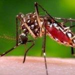 Chikungunya virus, spread by mosquitoes, found in Yala