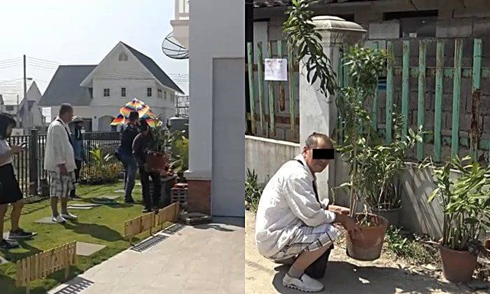 Chinese grandpa stealing tree's in Chiang Mai for his fancy home.