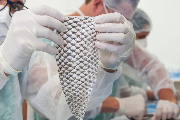Trans woman, 35, 'first in world' to get vagina made out of fish skin