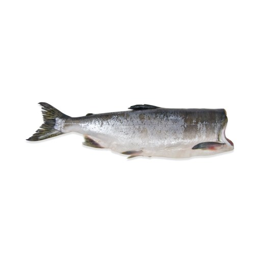 WHOLE PINK SALMON approx. 20 lbs total