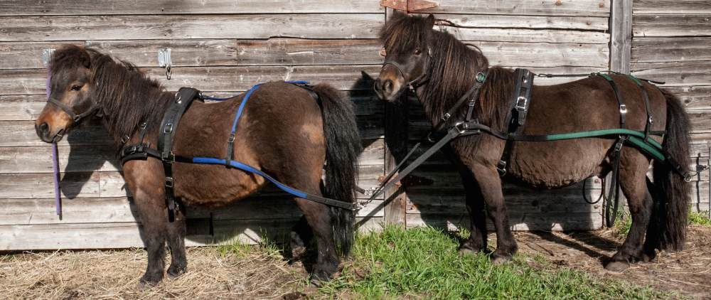 medium resolution of breast collar harness patty s pony place team horse harness parts pony team harness