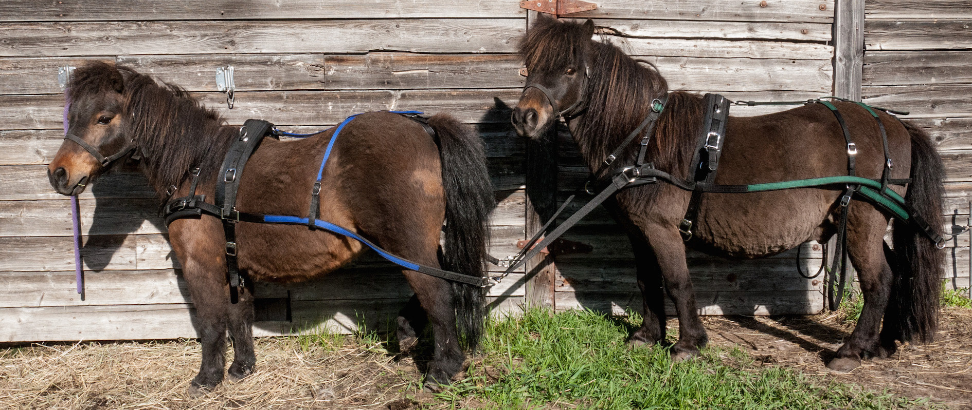 hight resolution of breast collar harness patty s pony place team horse harness parts pony team harness
