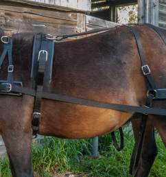 carriage harness 850 no collar and my draft style harness starts at 950 for a team no collars prices go up with size and colour combinations  [ 1100 x 767 Pixel ]