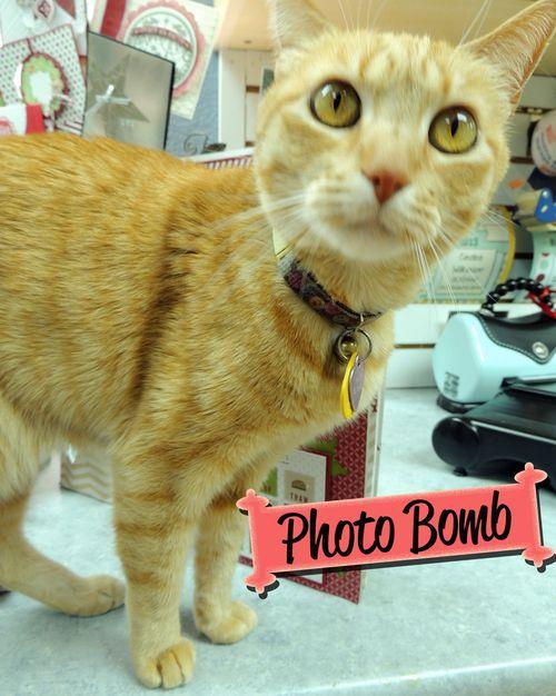 Cindee-cat-photo-bomb