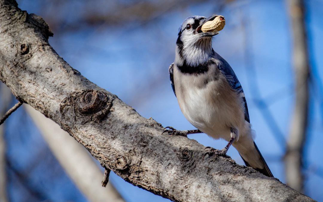 The Magic of the Peanut Feeder