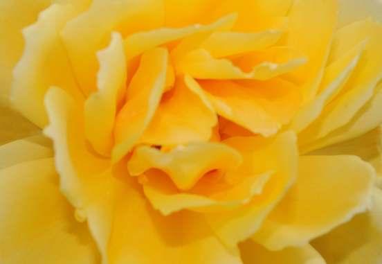 Consulta de Terapia Floral