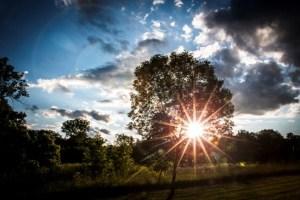 sunburst thru the trees