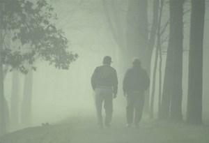 A misty walk