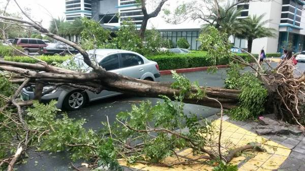 Typhoon glenda damage 1