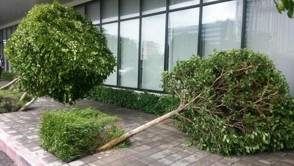 Typhoon glenda damage 3