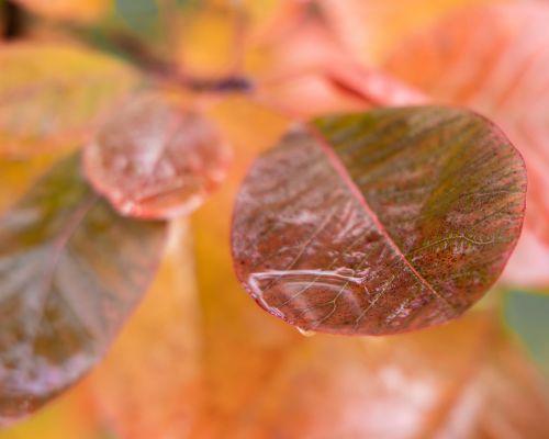 Raindrop on leaf